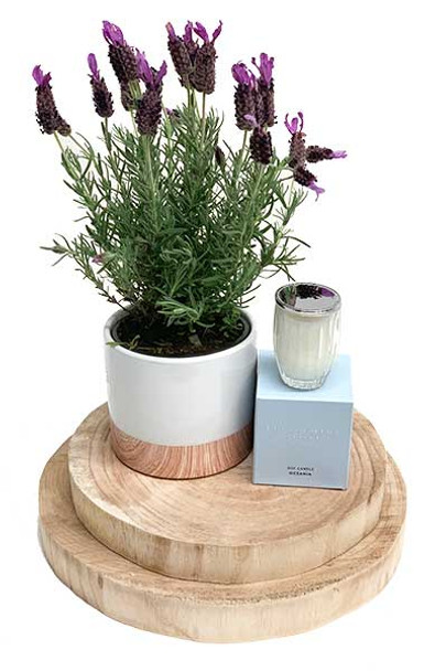 Fragrant Lavender Gift Plant with Luxury Candle