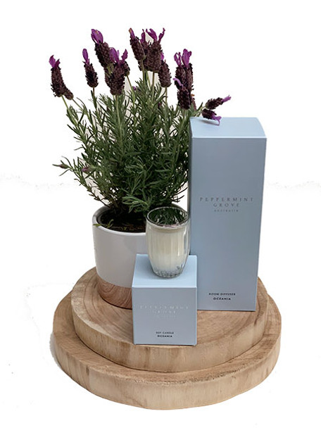 Fragrant Lavender Gift Plant + Luxury Candle  + Diffuser Set
