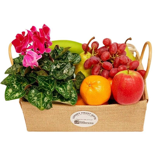 Plant Gift Basket with Fruit