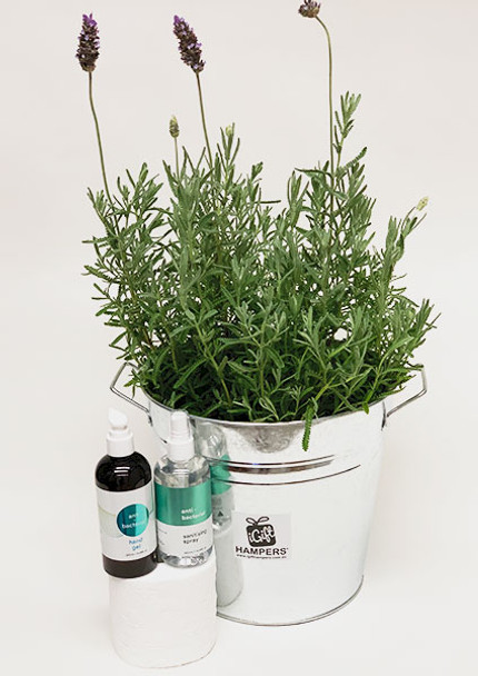 Lavender Plant Gift + Hand Sanitiser + Sanitising Spray + Toilet Roll