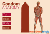 Condom Anatomy From Top to Bottom and Everything In Between