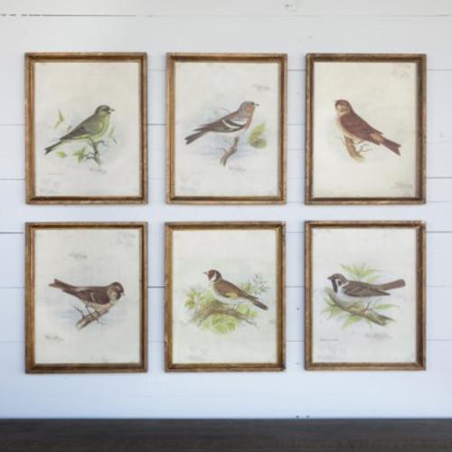 Vintage Bird Prints, Assorted Set of 6
