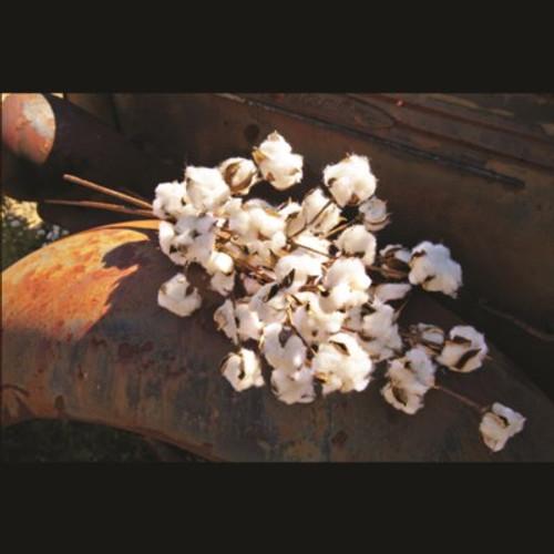 Large Cotton Stem