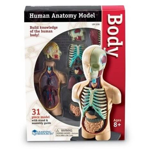 Learning Resources 31 Piece Anatomy Model of the Human Body by Learning Resources