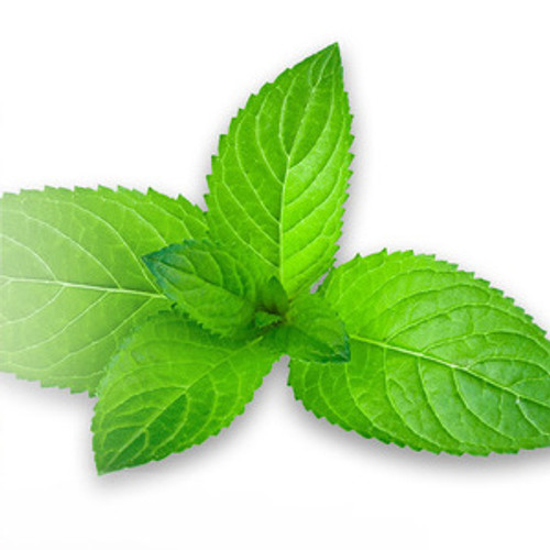 Cool Mint Concentrate 30ml