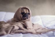 Can I use CBD as a sleep aid? A guide on how to sleep better, naturally