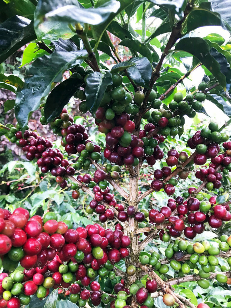 Colombia La Venta - Single Origin