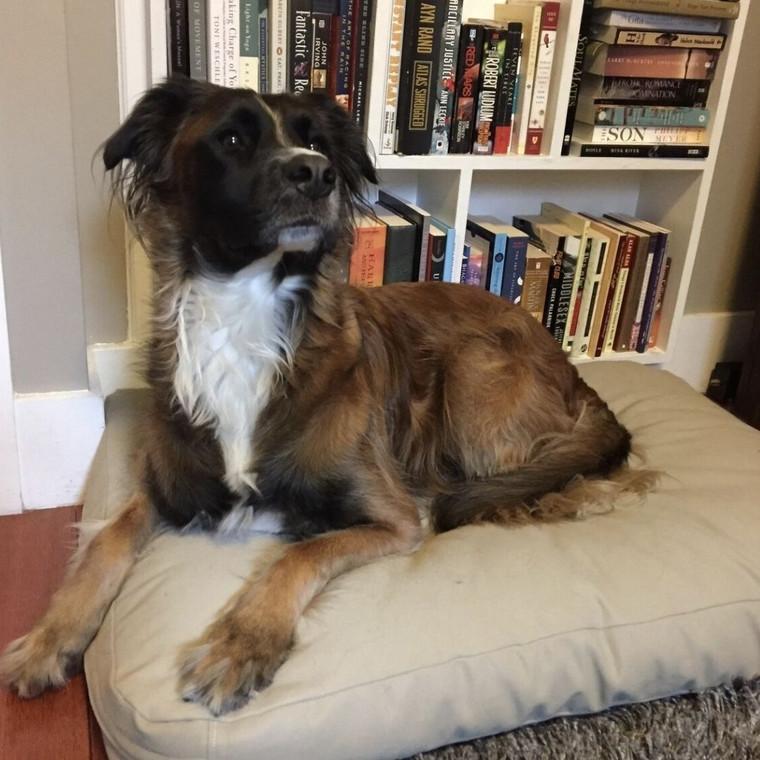 Leonard loves his dog bed!