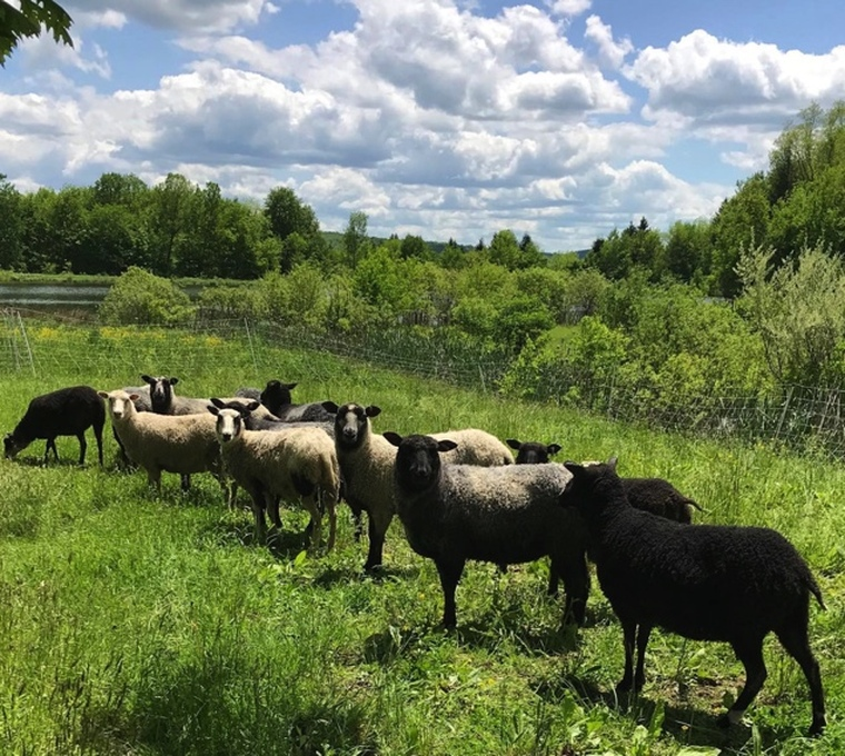 Ironwood Hill Farm - Finn Longwool Lamb Worsted 2-ply