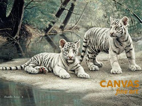 Charles Frace 'White Tiger Cubs' 9x12 Art Print O/E