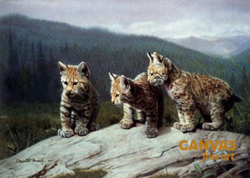 Charles Frace 'Three of a Kind' Leopard Cubs Canvas Art 9x12 O/E