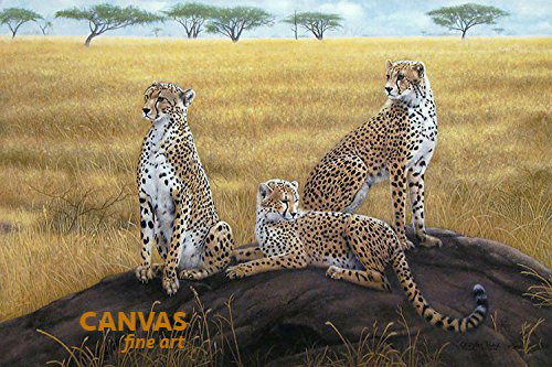 Charles Frace 'Morning Calm' Cheetah Canvas Signed & Numbered L/E