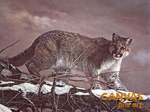 Charles Frace 'Cougar' Canvas Art 9x12 O/E