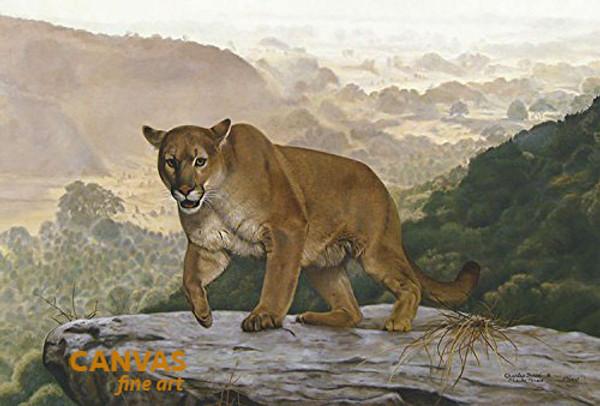 Charles Frace 'Shasta' Cougar Canvas Artist Proof L/E