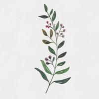 Watercolor Florals Painting Set