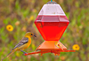 Perky Pet Deluxe Oriole Feeder