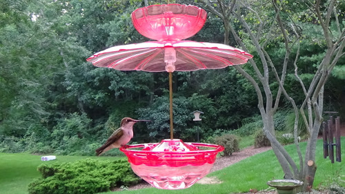 Rose HummBlossom Hummingbird Feeder with Rain and Ant Guard Accessories Kit