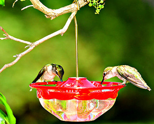 Aspects 433 HummBlossom Rose hummingbird feeder