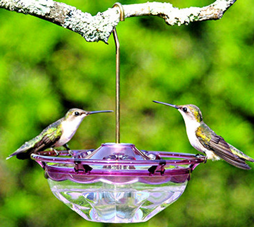 Aspects 434 HummBlossom Plum Hummingbird Feeder