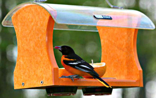 Birds Choice Recycled Orange Oriole Feeder
