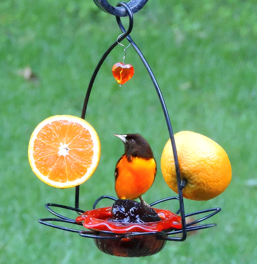 Backyard Nature Products Oriole Flower Feeder