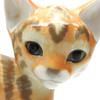 Tabby Kitten Lomonosov