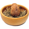 Newborn Field Mouse Wood Carving