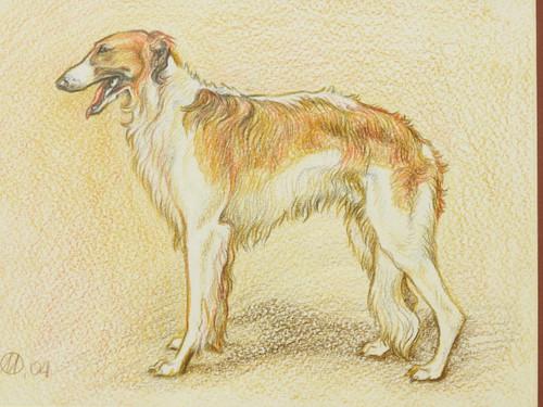 Pencil Drawing of Russian Borzoi