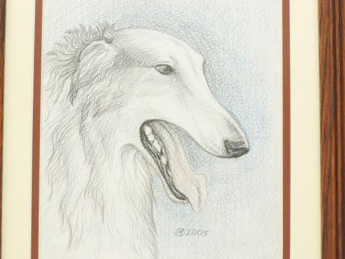 Pencil Drawing  Russian Borzoi
