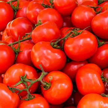 Tomatoes per kg buy fresh fruit and vegetables online Malta