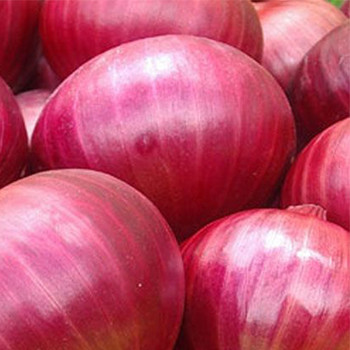Fresh Red Onion buy fresh fruit and vegetables online Malta