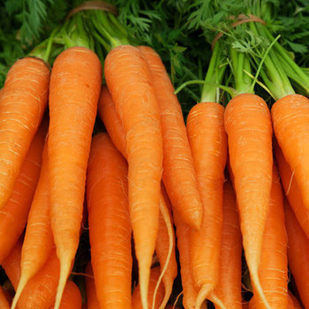 Carrots per kg buy fresh fruit and vegetables online Malta