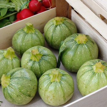 Marrows (Zucchini) per kg buy fresh fruit and vegetables online Malta