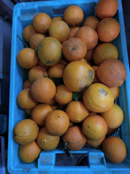 Maltese Navel Oranges per kg buy fresh fruit and vegetables online Malta