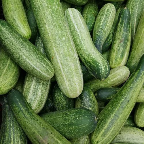 Cucumber per piece buy fresh fruit and vegetables online Malta