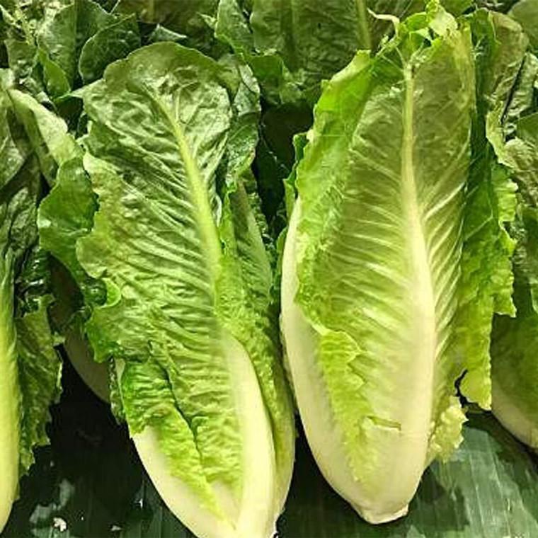 Lettuce Long Leaf per piece buy fresh fruit and vegetables online Malta