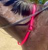 Jemelli Neck Strap in Hot Pink
