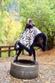 Riding Poncho in Diamond Rain Sheepskin Trim  (One Left)