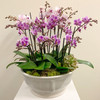 Orchid Ambiance
