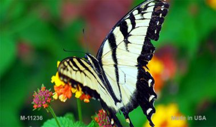 Butterfly - Black and White Novelty Magnet