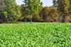 Winter-Greens plot