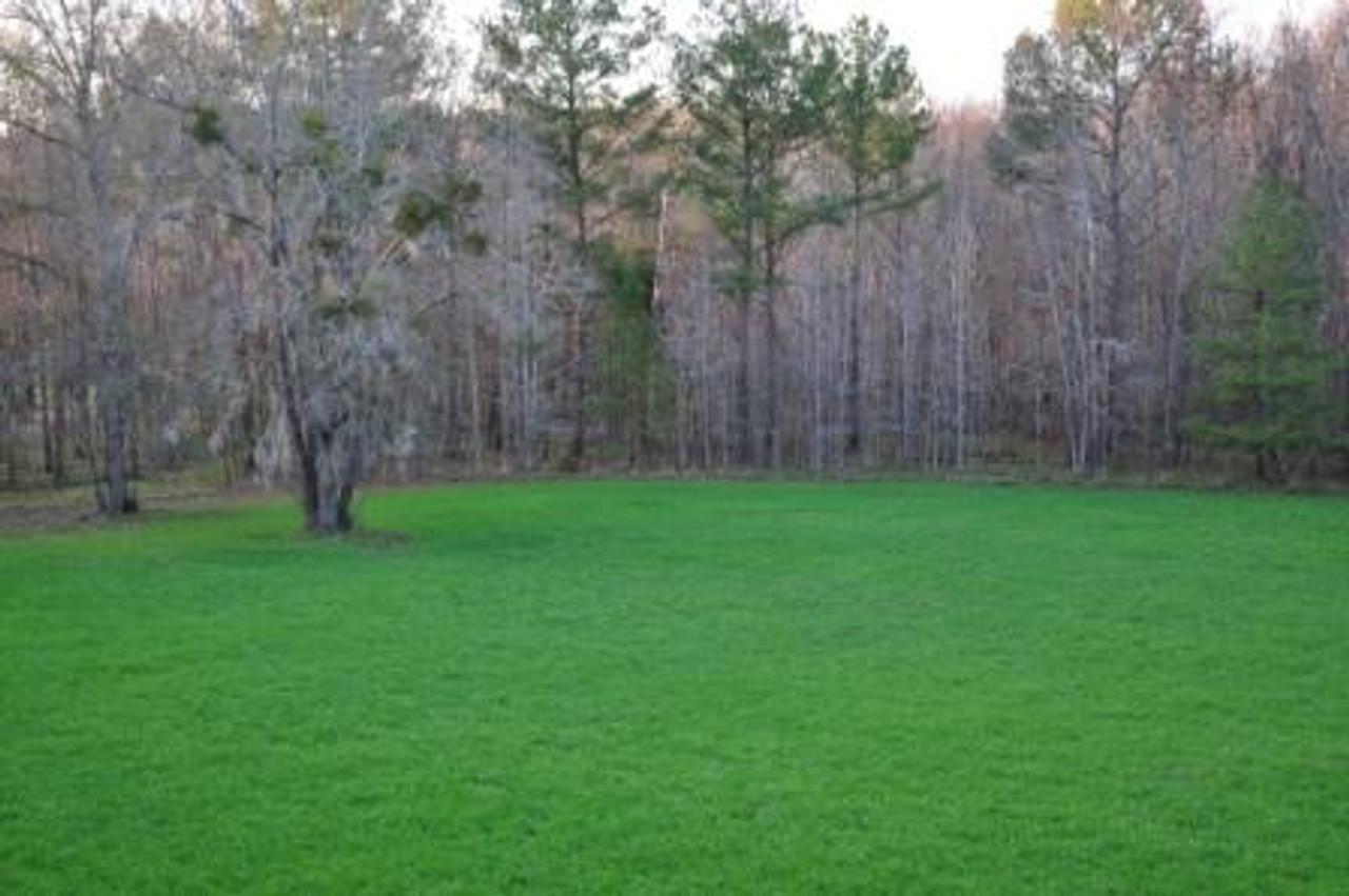 Whitetail Oats Plus field