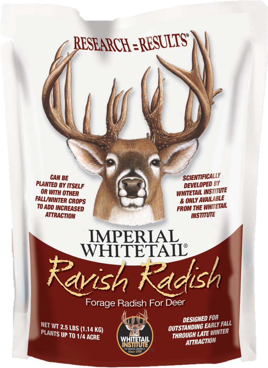 Ravish Radish
