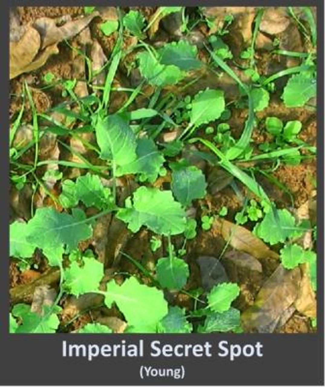 Young Secret Spot