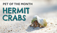 Hermit Crabs: Fun Facts and Pet Care Tutorials
