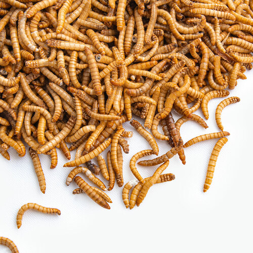 detailed photo of our bulk freeze dried mealworms