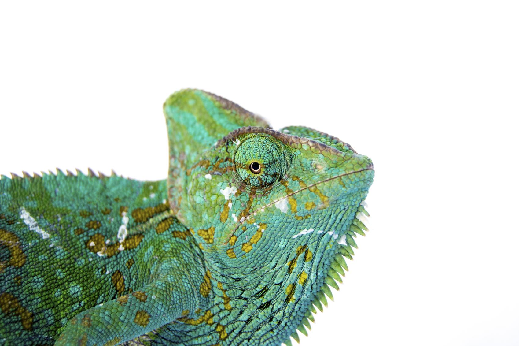 chameleon-big.jpg