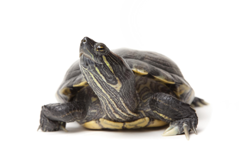 turtle-big.jpg