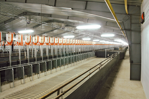 Quarter Stall Feeding stalls for group sow housing Supplying the right housing and feeding systems for sows in gestation plays an important role in economic success. Quarter stalls are a simple and economic way to provide group housing and can be easily fit to your farm's individual requirements.  Important Advantages All sows eat at the same time Sows can easily be supervised during feeding times Sows do not need any training for this system No aggression during feeding Feeding space is 45 – 55 cm (17.72 – 21.65 inches) wide Simple pen arrangement Cost-effective solution