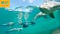 COMBO: Atlantis Aquaventure + Deep Water Dolphin Interaction + Lunch